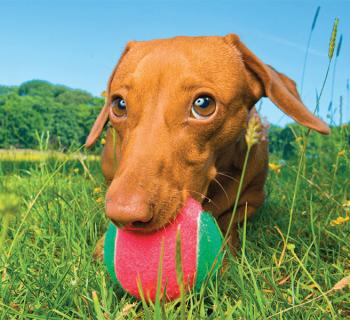 Copyright Bounders Dog Photography