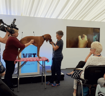 animal therapy media