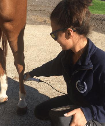 Pegasus therapy