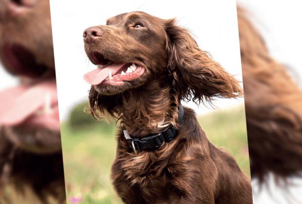 animal therapy magazine