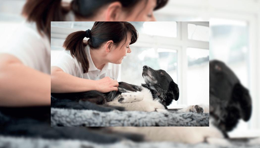 Integrated Veterinary Care Initiative